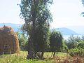 Near seeds, far away the island in Prespa lake.jpg