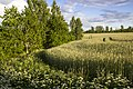 Nearly 29 km hike on the former railway Kuldīga-Alsunga - panoramio (6).jpg
