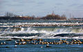 Niagara River Parkway.jpg