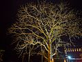 Night glow of the tree with only branches.jpg