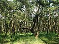 Niji Pine Grove 2.jpg