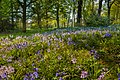 Normanby Hall grounds IMG 1461 - panoramio.jpg