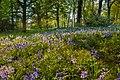 Normanby Hall grounds IMG 1461 - panoramio.jpg