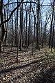 North Trail Lee Tartt Nature Preserve 3.jpg