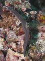 Nudibranch (14466162264).jpg