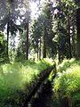 Oberharzer wasserregal graben zw torfhaus u wolfswarte ds wv 08 2007.jpg