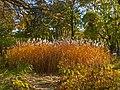Odessa Botanic Garden Autumn 01.jpg