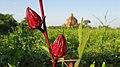Old Bagan, Myanmar, Red flowers.jpg