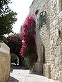 Old Jerusalem Maamadot Yisrael Street Bougainvillea.jpg