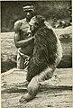 Old Tchego (chimpanzee).jpg
