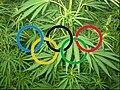 Olympic canavis1.jpg
