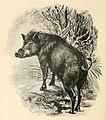 On safari - big game hunting in British East Africa, with studies in bird-life (1908) (14750693362).jpg