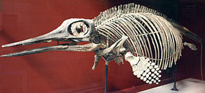 Ophthalmosaurus - O. icenicus skeleton