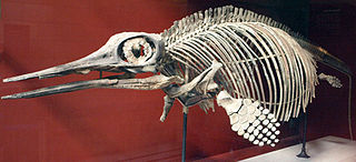 <i>Ophthalmosaurus</i> genus of reptiles (fossil)