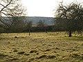 Orchard, Waddeton - geograph.org.uk - 1169887.jpg