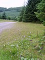 Orchids - geograph.org.uk - 895641.jpg