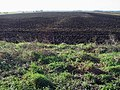Osier Fen, Near Farcet - geograph.org.uk - 114609.jpg