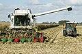 Overzicht van een combiner en een tractor bezig met het binnenhalen van de oogst, gezien vanaf de Provincialeweg Zuid nabij Eethen - Eethen - 20413616 - RCE.jpg