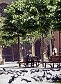 Oviedo-04-alter Mann und Tauben-1996-gje.jpg