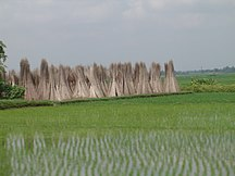 Bengala Ocidental
