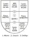 Pajzsrészek spanyolul.png