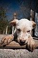 """Para """"Rescate Animal"""" (4304467407).jpg"""