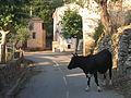 Parc Hte Corse-Bozio-Favallélo8.JPG