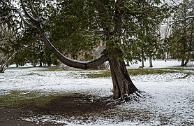 Parc de la Chute-Montmorency 004.jpg