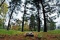 Parco locale del bosco di Legnano 3.jpg