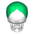 Parietal bone posterior.png