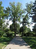 Park Čair, Niš, Srbija 11.jpg
