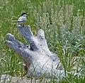 Parker River National Wildlife Refuge, MA. Credit- Matt Poole-USFWS (11805566374).jpg