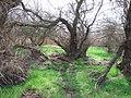 Parque Nacional de las Tablas de Daimiel, Ciudad Real (512663368).jpg