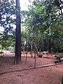 Parque da Cidade - Jundiaí - panoramio (97).jpg