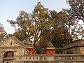 Pashupatinath Temple IMG 1496 33.jpg