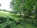 Pasture, ferns and trees at Caen-hen - geograph.org.uk - 473596.jpg