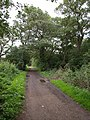 Path at Kingston Vale - geograph.org.uk - 1454011.jpg