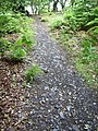 Path in Swithland Woods - geograph.org.uk - 863162.jpg