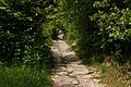 Path up Colley Hill - geograph.org.uk - 1316011.jpg
