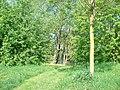 Paysage (Colmar) (1).jpg
