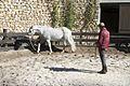 Pena Park - Horse Training (32967477381).jpg