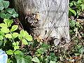 Picea seit 8 Jahren tot.jpg