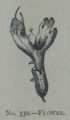 Picture Natural History - No 330 - Flower.png