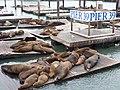 Pier 39 Seals - Focas - panoramio.jpg