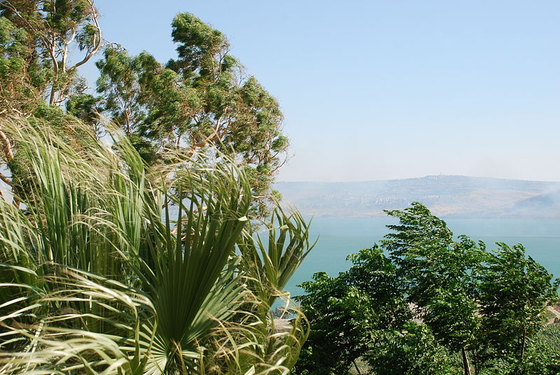 Trees Sea of Galilee