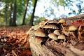 Pilze im Herbst.jpg