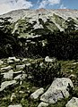 Pirin-2014-Todorka10.jpg