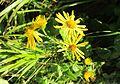Plant in Smutna dolina (2).jpg