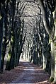 Playing of light with beechtrees at Lage Erf Schaarsbergen - panoramio.jpg