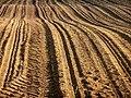 Plowed land 1r.jpg